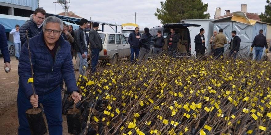 Konya'da Çiftçilere 5 Bin Fidan Dağıtıldı