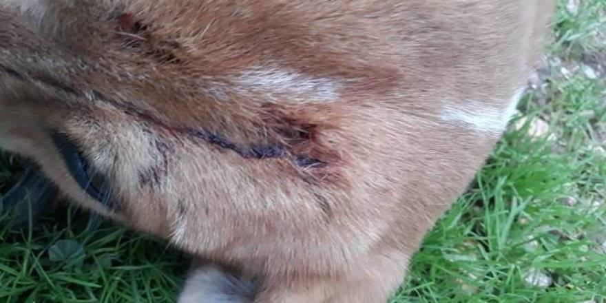 Antalya'da Yavru Köpeğin Üzerine Acımasız Saldırı