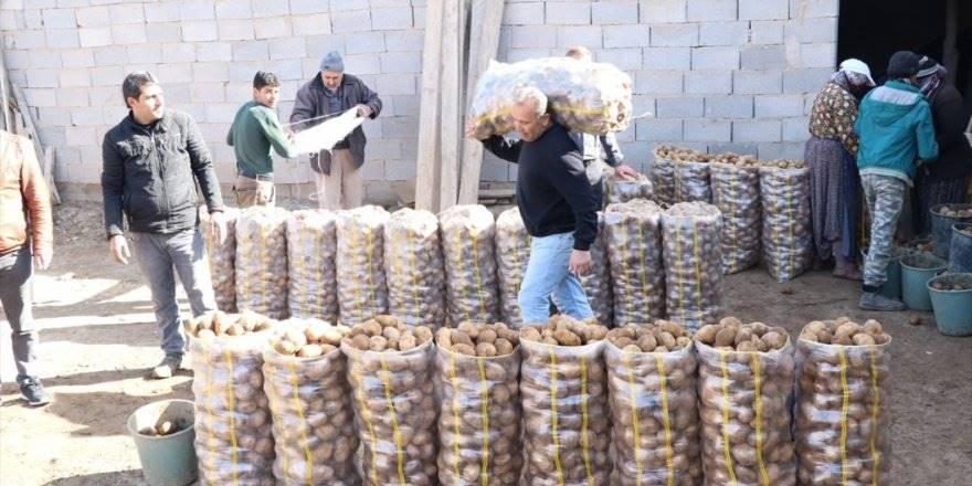 Tanzim Satışın Patatesi Niğde'den