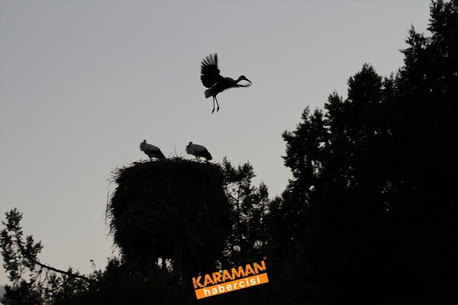 Konya'da Leylekler Vadisi'nde Kartpostallık Görüntüler 1
