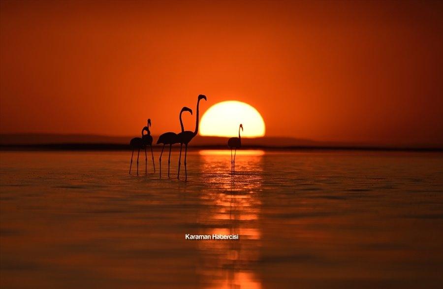 Tuz Gölü'nde Yavru Flamingo Şöleni 1