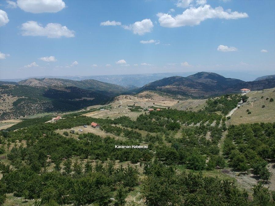Karaman'da Kiraz Yetiştiriciliği 1