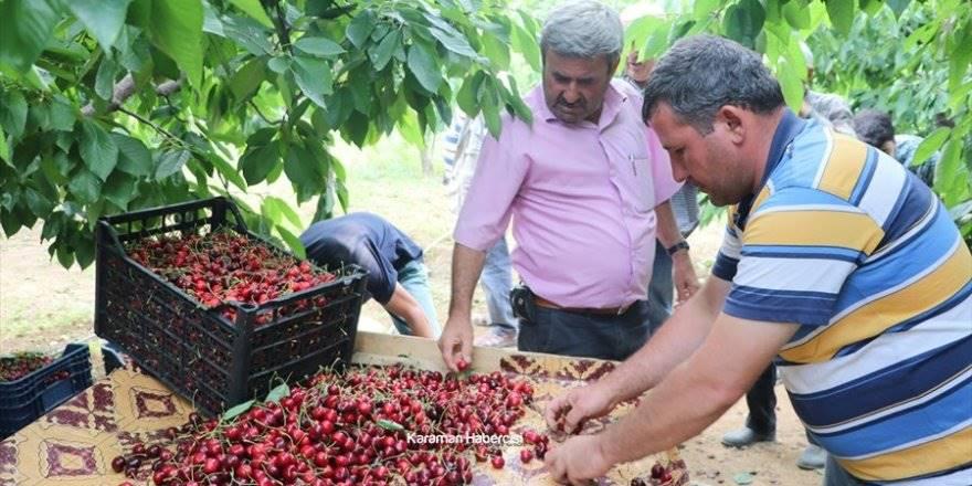 Karaman'da Kiraz Yetiştiriciliği