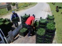 Karaman'a 60 Bin Çiçek Ekildi