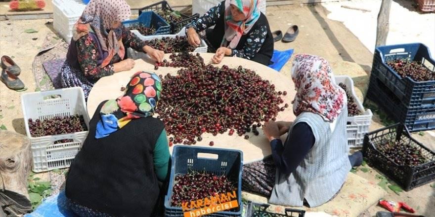 Konya'nın Hadim İlçesinden Güney Koreye Kiraz İhracatı