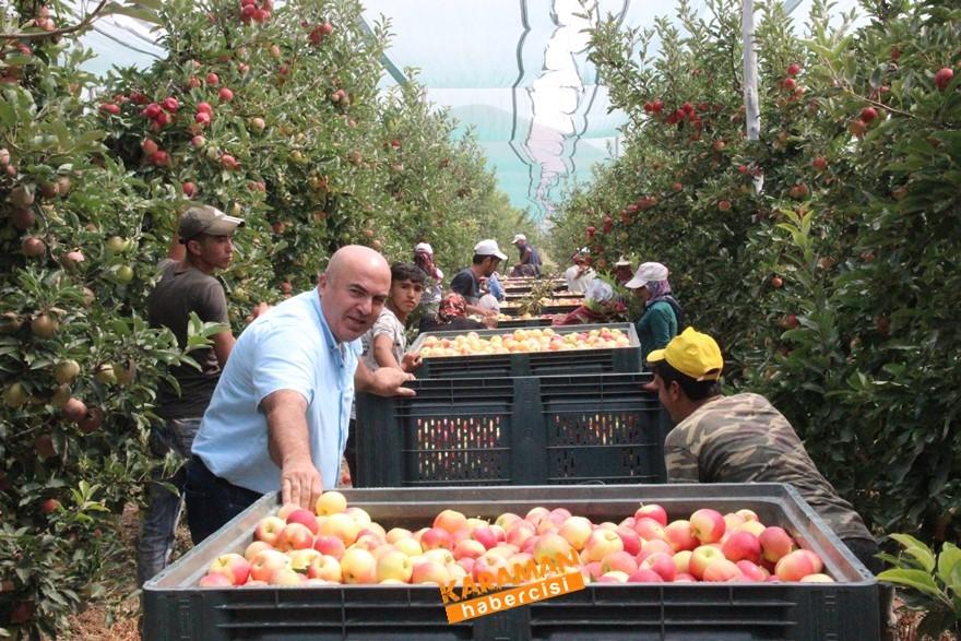 Karaman'da Elma Hasadı 1