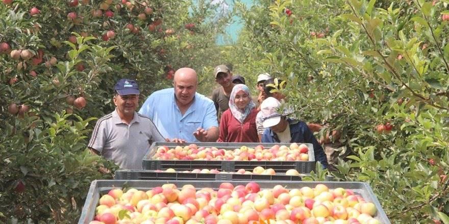 Karaman'da Elma Hasadı