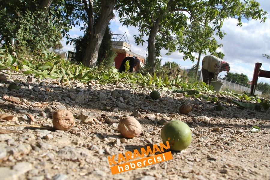 Konya'da Vinç Yardımı İle Ceviz Toplama 2