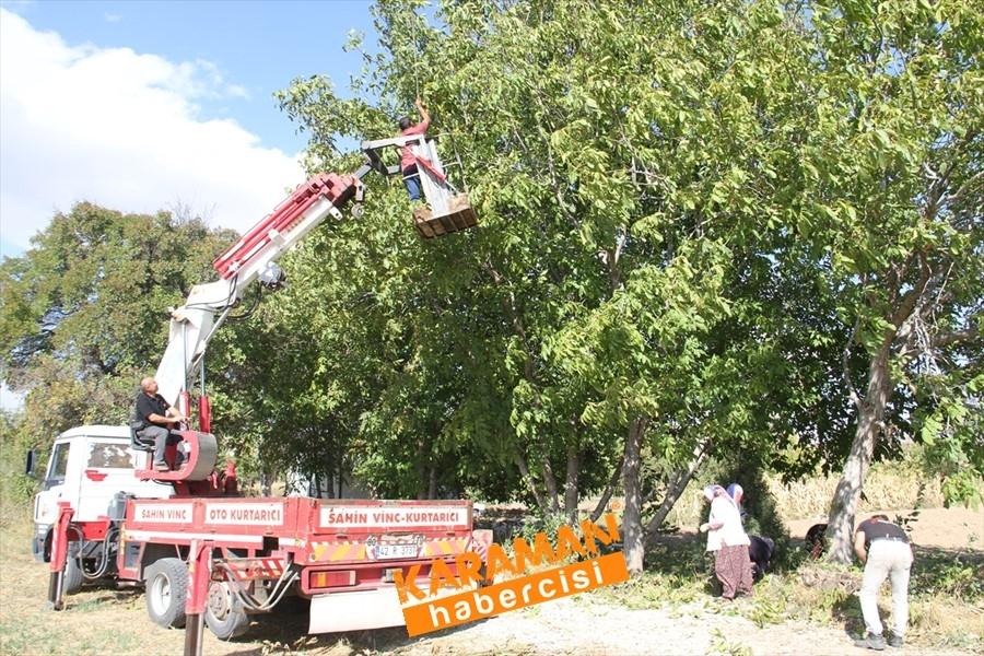 Konya'da Vinç Yardımı İle Ceviz Toplama 5