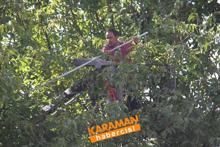 Konya'da Vinç Yardımı İle Ceviz Toplama 6