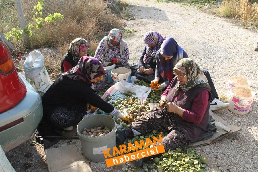 Konya'da Vinç Yardımı İle Ceviz Toplama 9