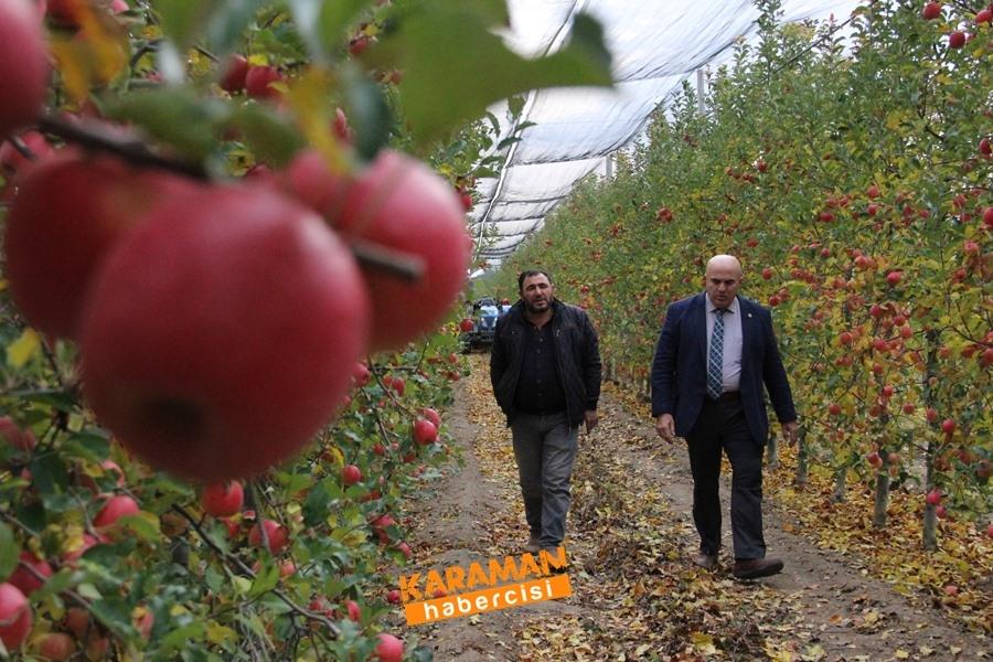 Karamanlı Elma Üreticisinin Yüzü Gülecek mi? 11