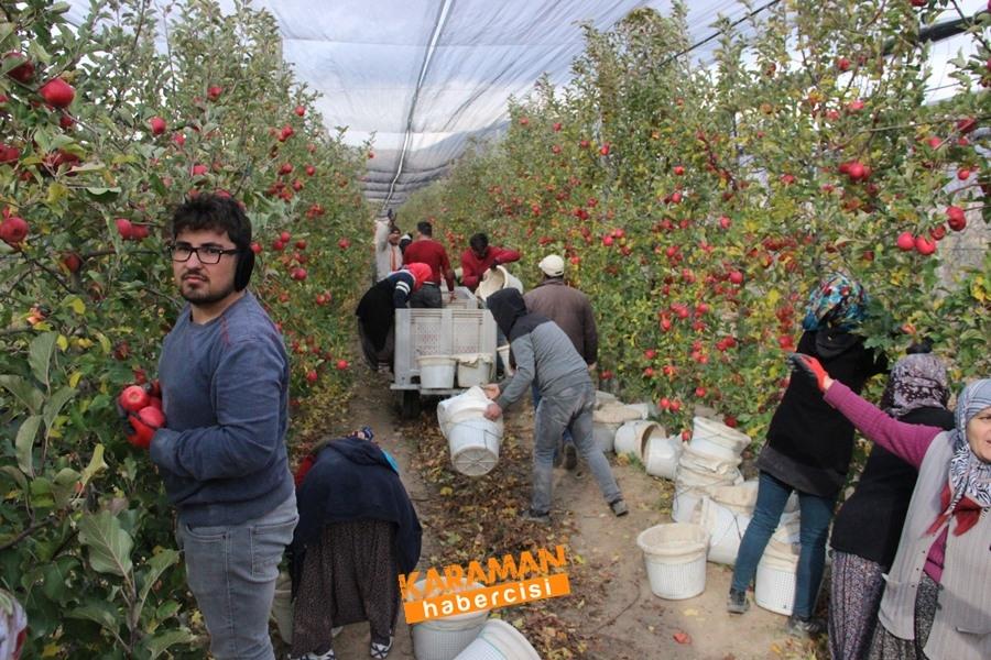 Karamanlı Elma Üreticisinin Yüzü Gülecek mi? 14