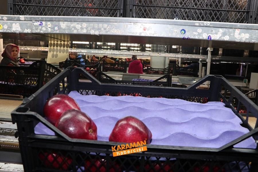 Karaman'ın Elması Soğuk Hava Depolarında 12