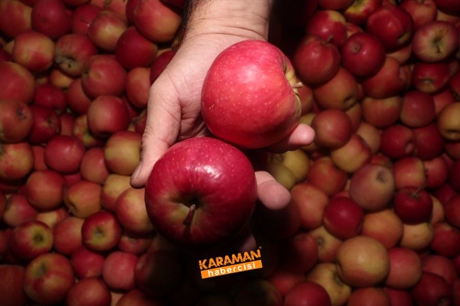 Karaman'ın Elması Soğuk Hava Depolarında 3