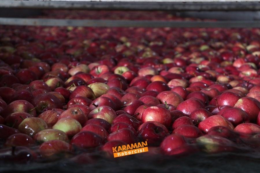 Karaman'ın Elması Soğuk Hava Depolarında 4