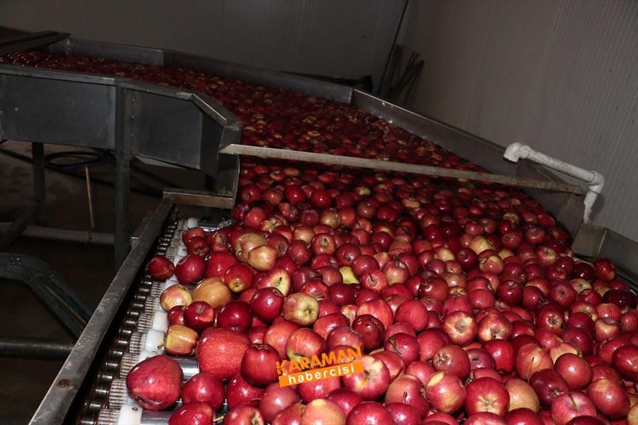 Karaman'ın Elması Soğuk Hava Depolarında 5