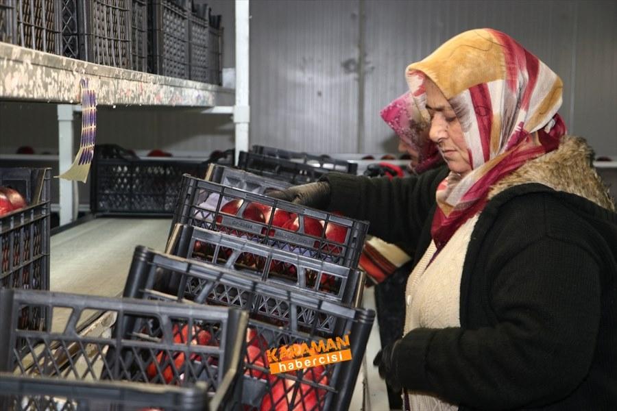 Karaman'ın Elması Soğuk Hava Depolarında 8