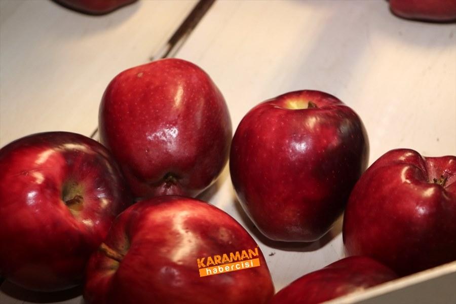 Karaman'ın Elması Soğuk Hava Depolarında 9