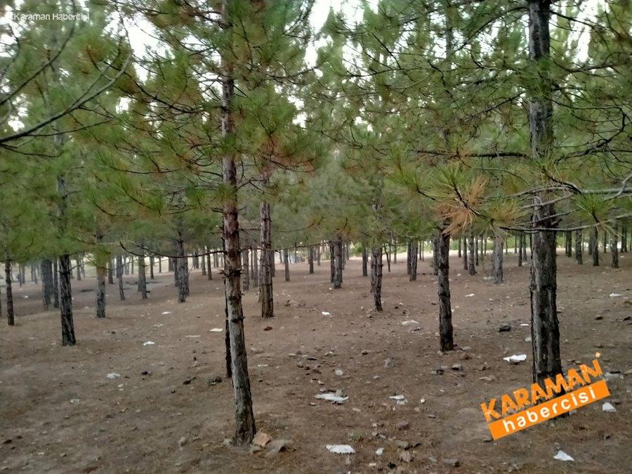 Karaman Dereköy Piknik alanı 5