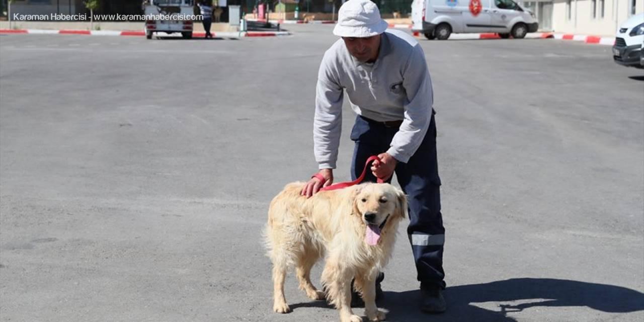 Mersin'de Başından Silahla Vurularak Yaralanan Köpeğe Yardım Eli