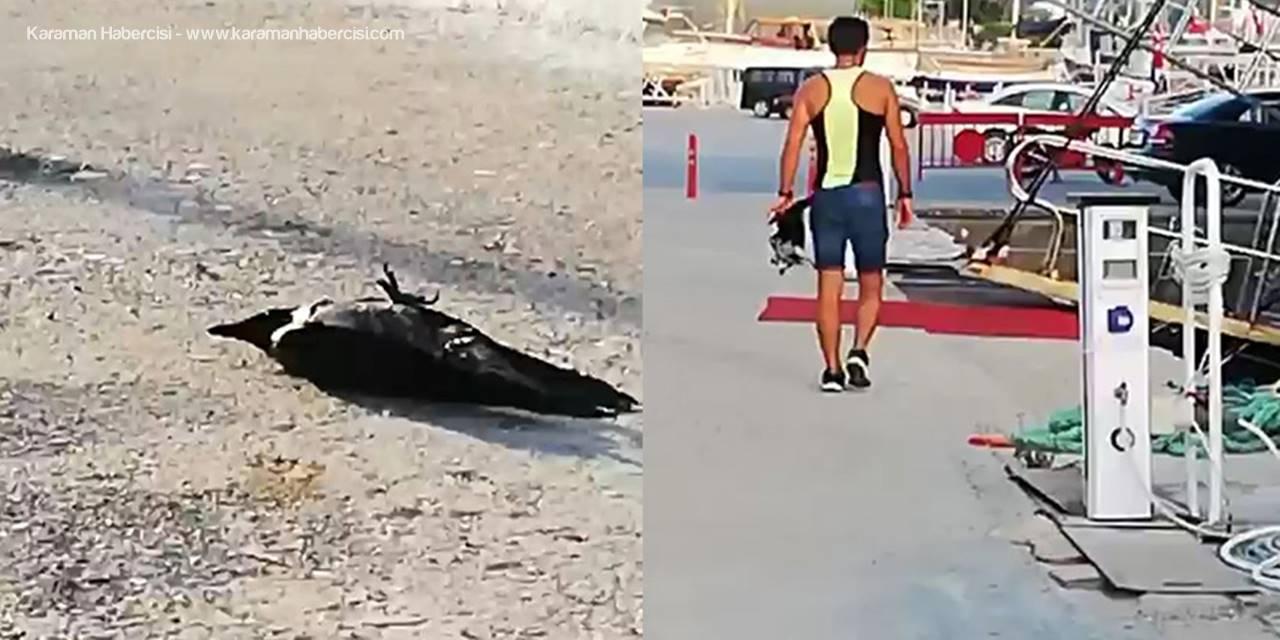 Antalyalılar Vurulan Kargalara Kayıtsız Kalmadılar