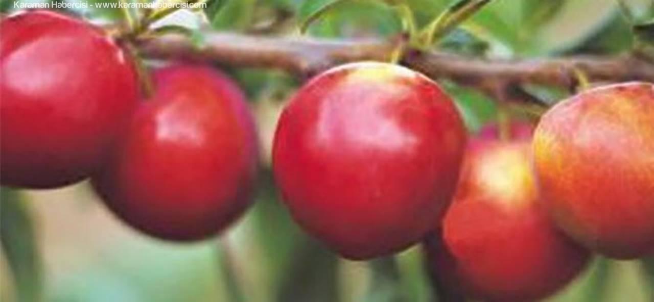 Karaman Elma Üretiminde İkinci