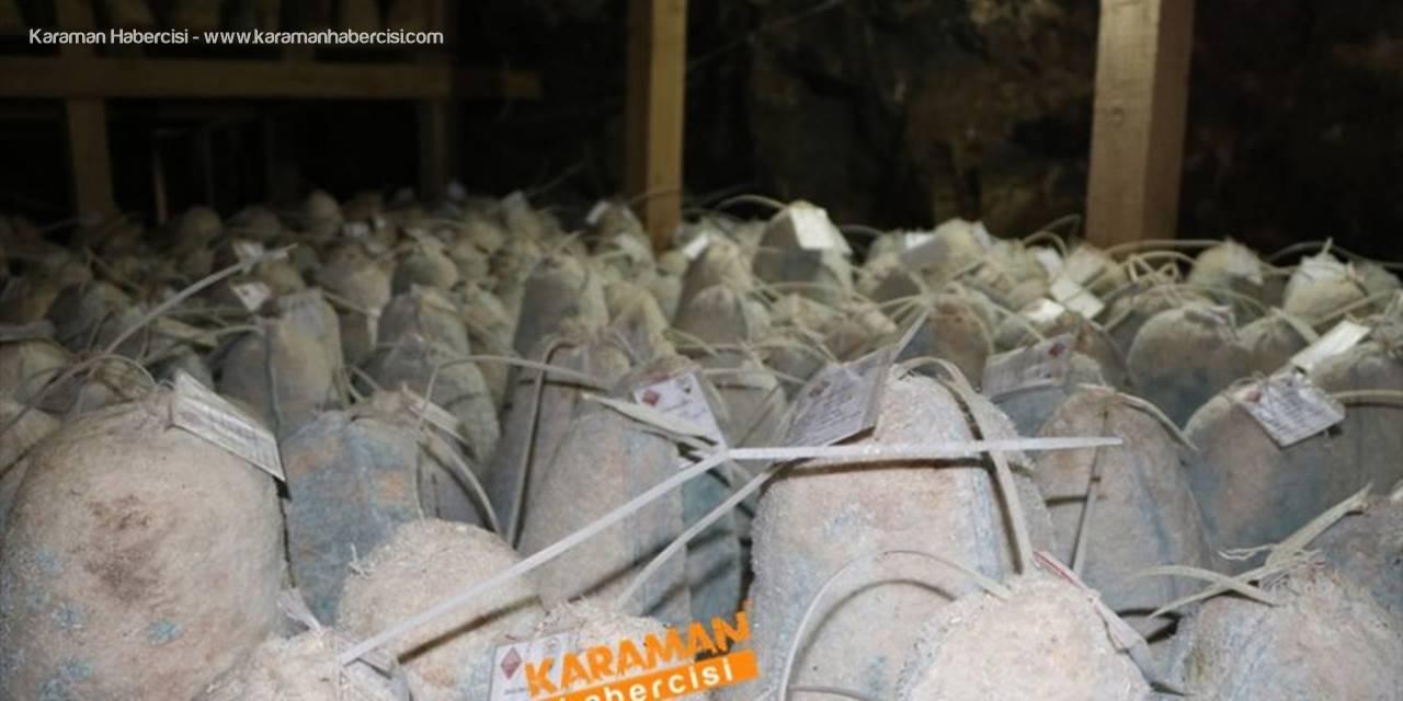 Divle Obruk Peynirleri Yeni Sezon Öncesi Mağaralara Girdiler