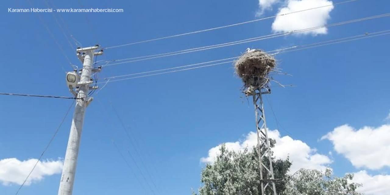 Kulu'da Demir Elektrik Direği Leyleklere Yuva Olarak Bırakıldı