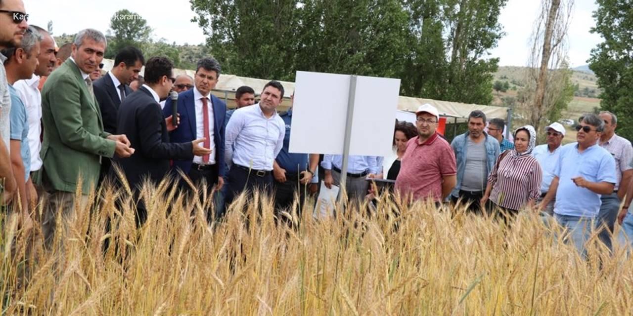 """Niğde'de """"Yerel Buğday Tarla Günü"""""""