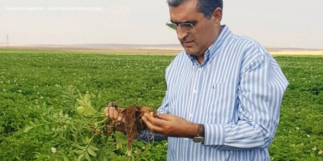 Konya Şeker'den Patates Üreticilerine Hasat Öncesi Bakım Avansı