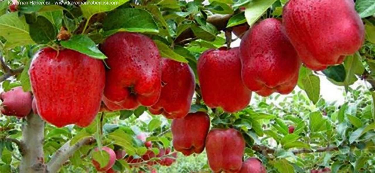Karaman'daki Elmanın Sofraya Ulaşma Serüveni