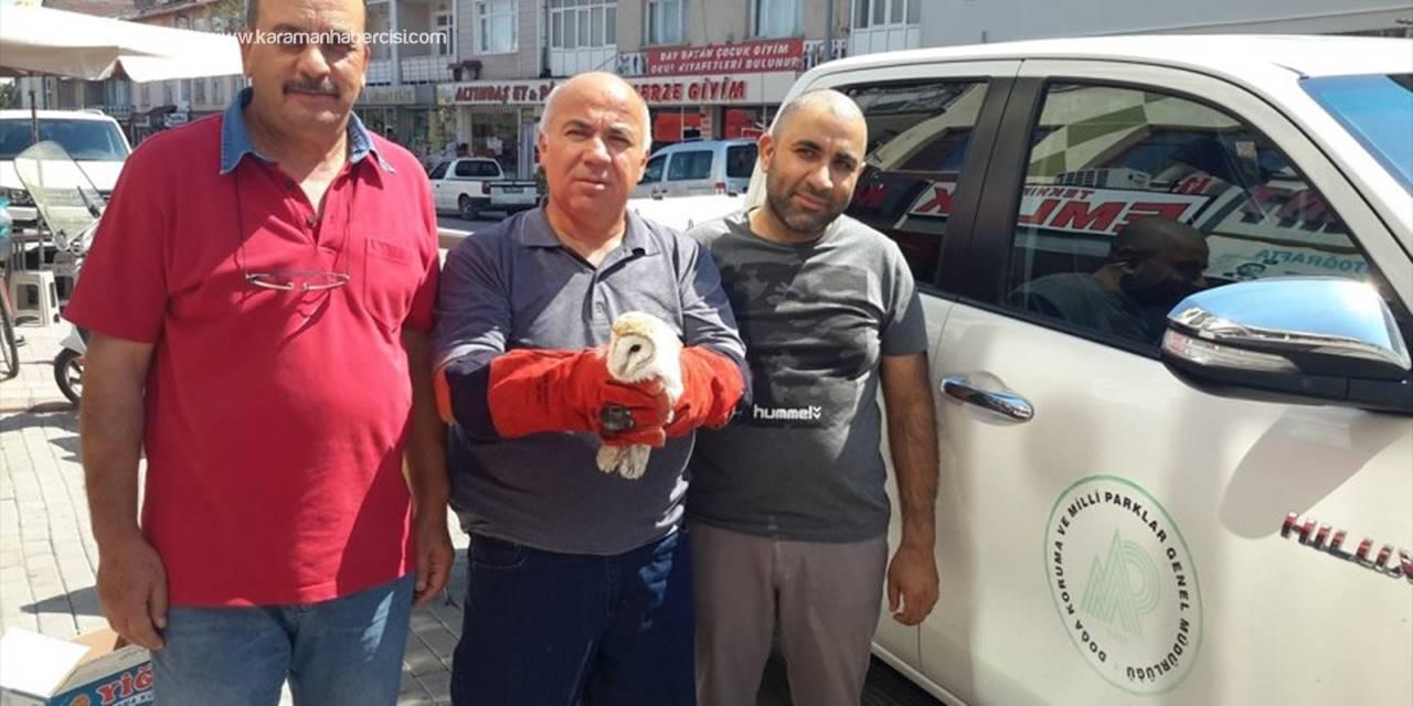 Yaralı Peçeli Baykuş Tedavi Altına Alındı