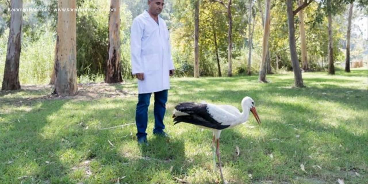 Mersin'de Yaralı Leylek Tedavi Altına Alındı