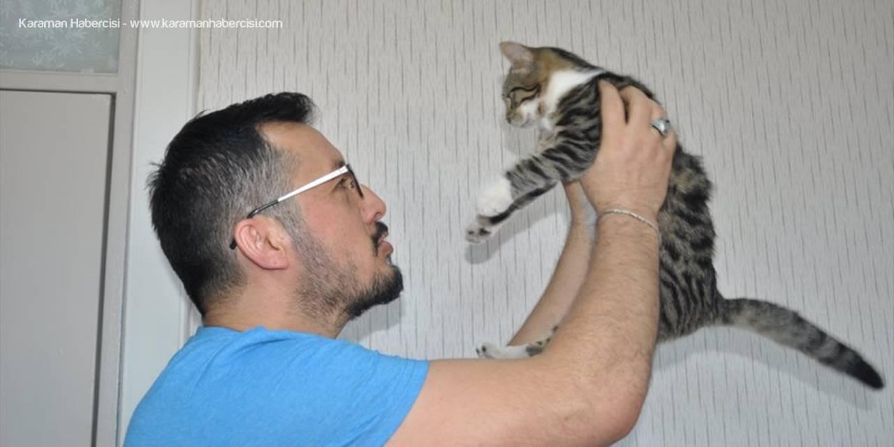 Yaralı Kedi Yavrusu Yürüteçle Hayata Tutundu