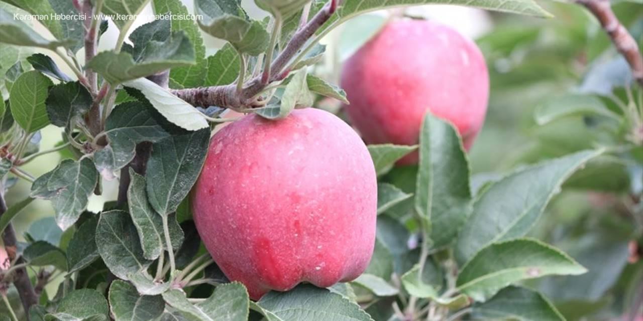 Niğde Elması İhracatında Hedef 10 Bin Ton