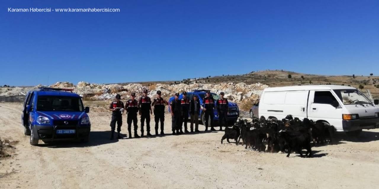Jandarma Ekiplerin Tarafından 38 Küçükbaş Hayvan Bulundu