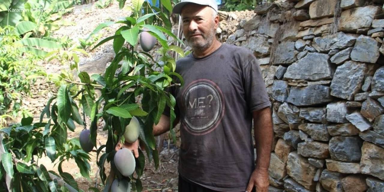 Tropikal Meyve Ağaçları Adeta Kazanç Kapısına Dönüştü