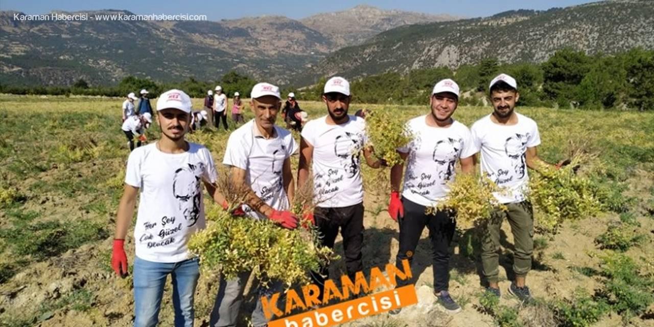 Karaman'da Ekilen O Nohutlar Öğrenciye Burs Olacak