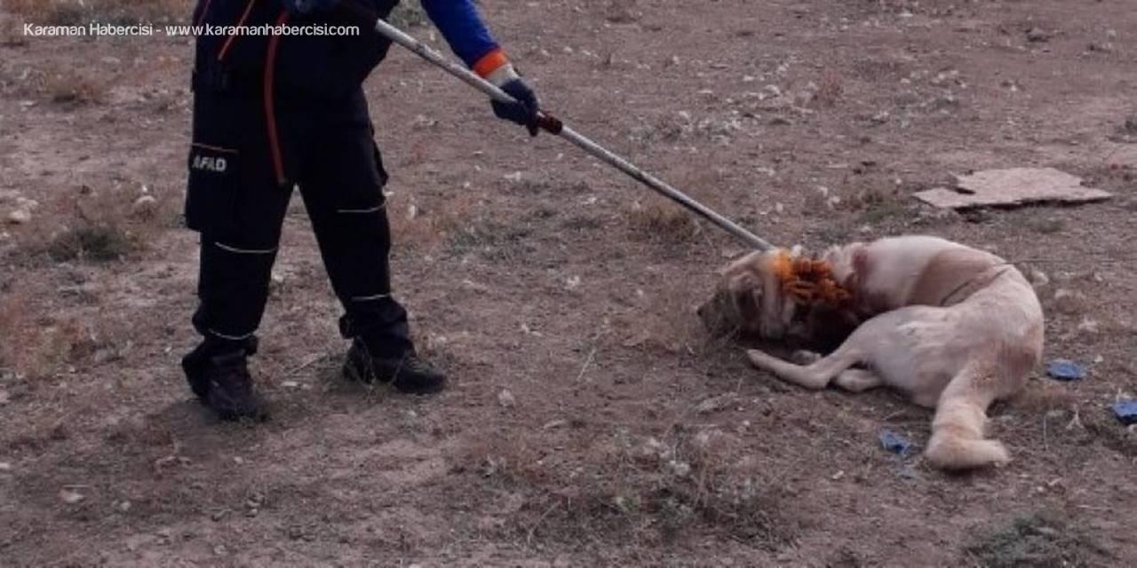 Aksaray'da Boynuna İp Dolanan Köpek Zor Anlar Yaşattı