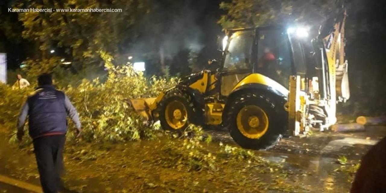Antalya'nın Kumluca İlçesinde Fırtına Ağaçları Kökünden Söktü