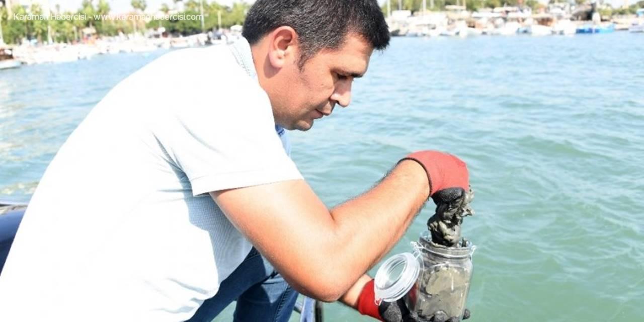 Mersin Büyükşehir Belediyesi Temiz Deniz Denetimini Büyük Bir Titizlikle Sürdürdü