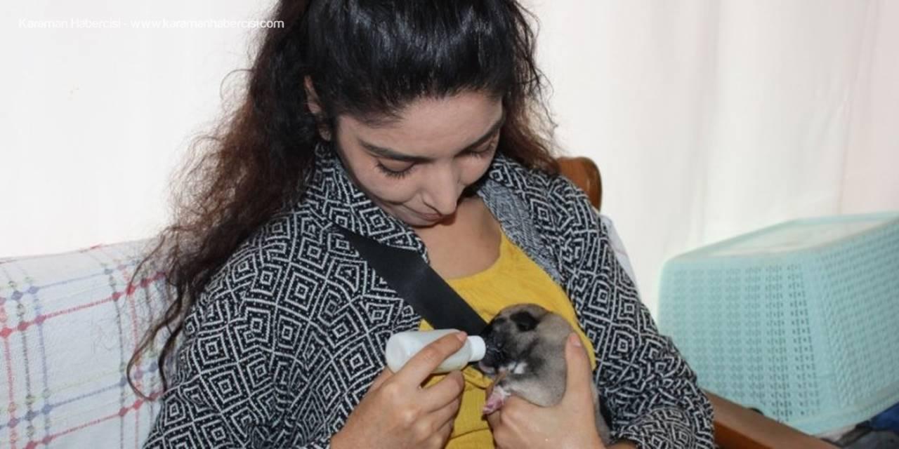 Annesiz Yavru Köpeği Biberonla Besliyor