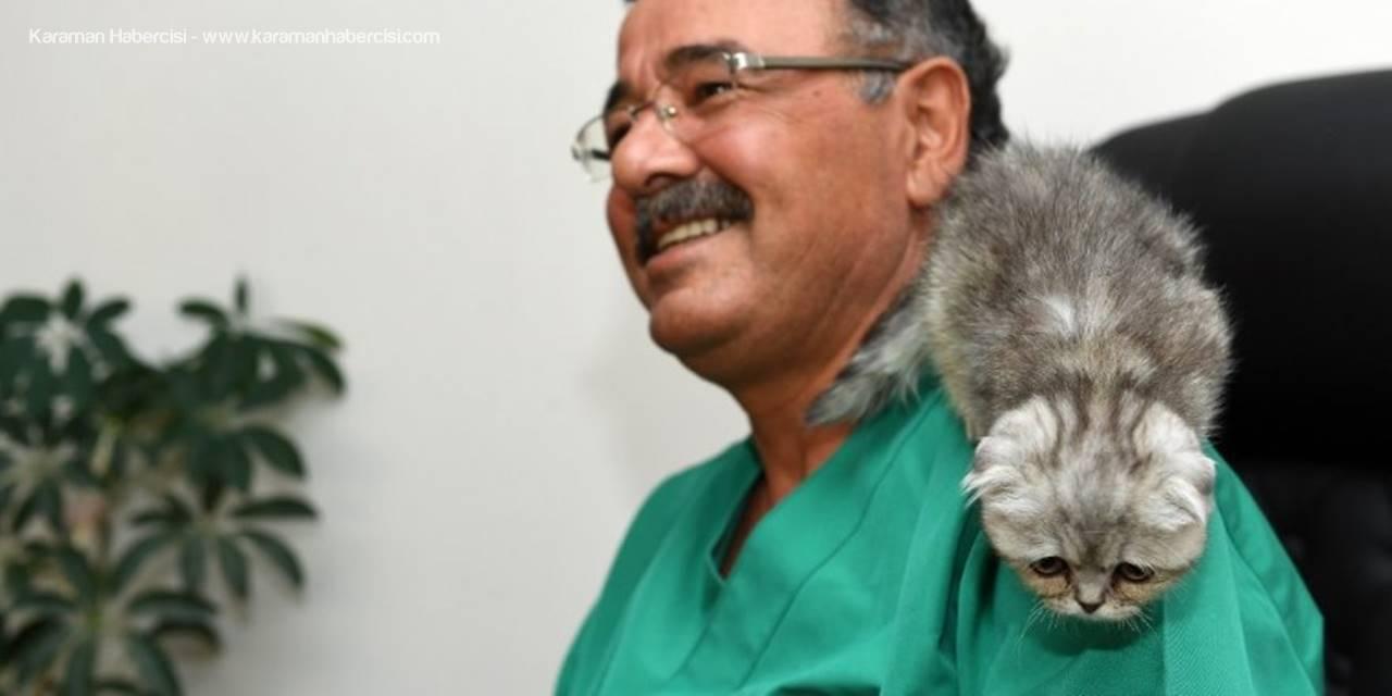 Yavru Kedi Cerrahi Müdahale İle Hayata Tutundu