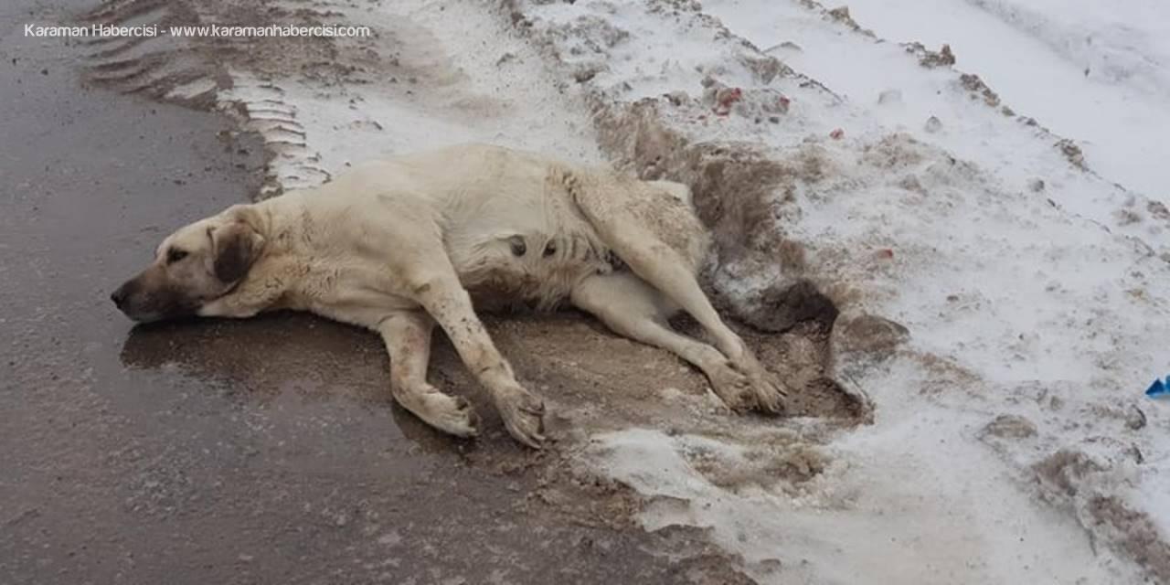 Yaralı Köpeğe Belediye Ekiplerinden Müdahale