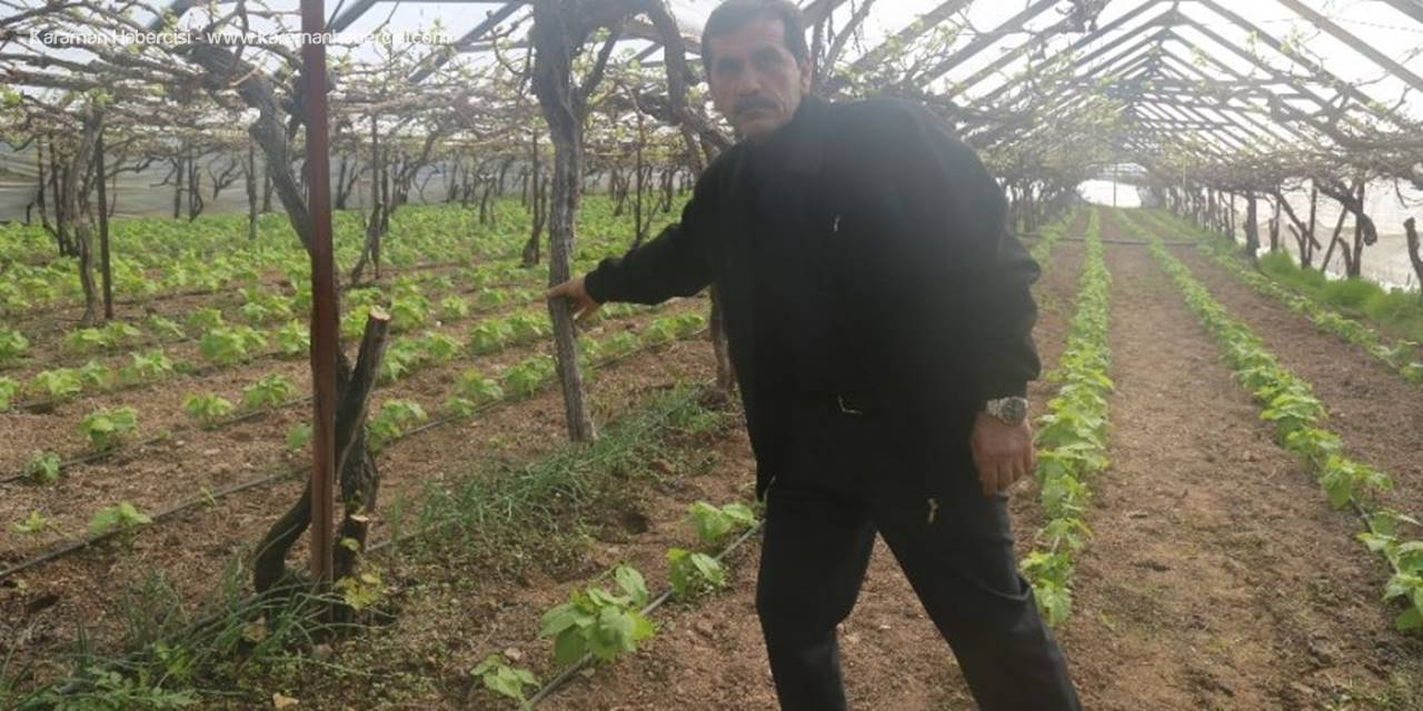 Mersin'de Vicdanları Sızlatan Ağaç Katliamı