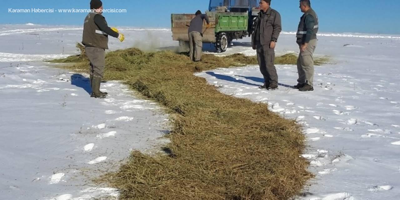 Konya'da Yaban Hayvanları İçin Yemleme Çalışması