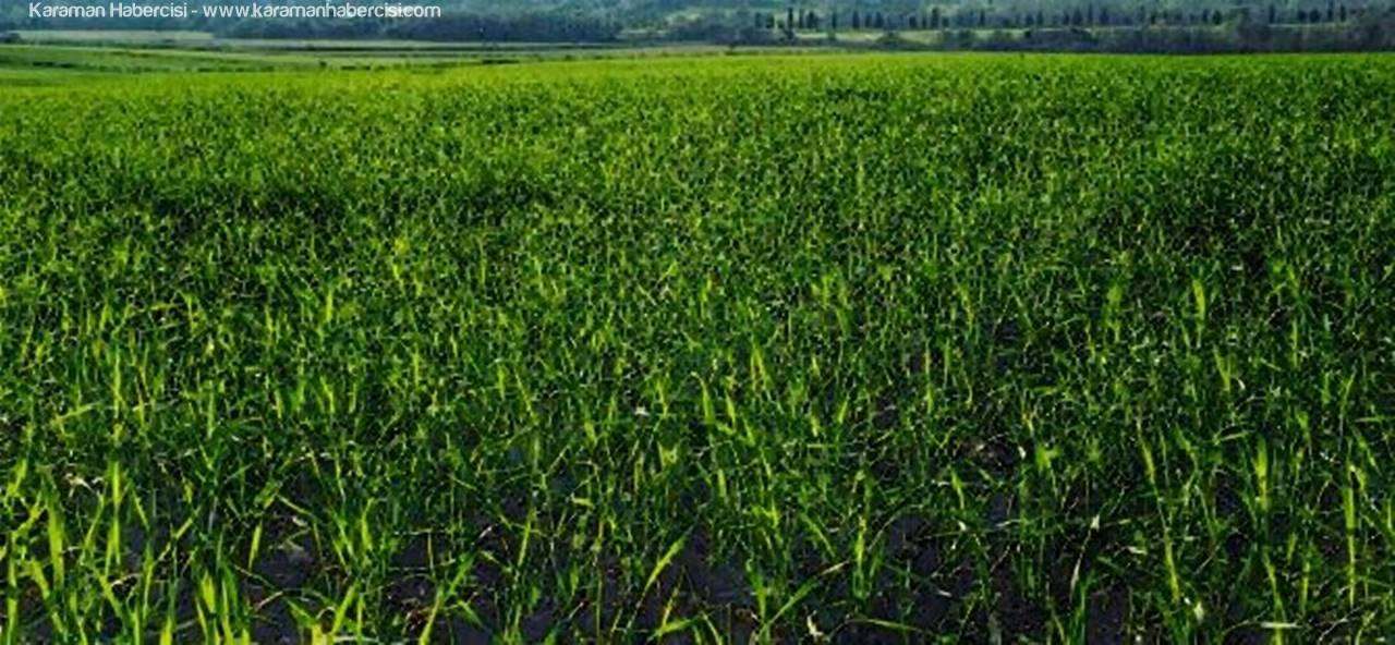 Karamanlı Çiftçilerin Dikkatine