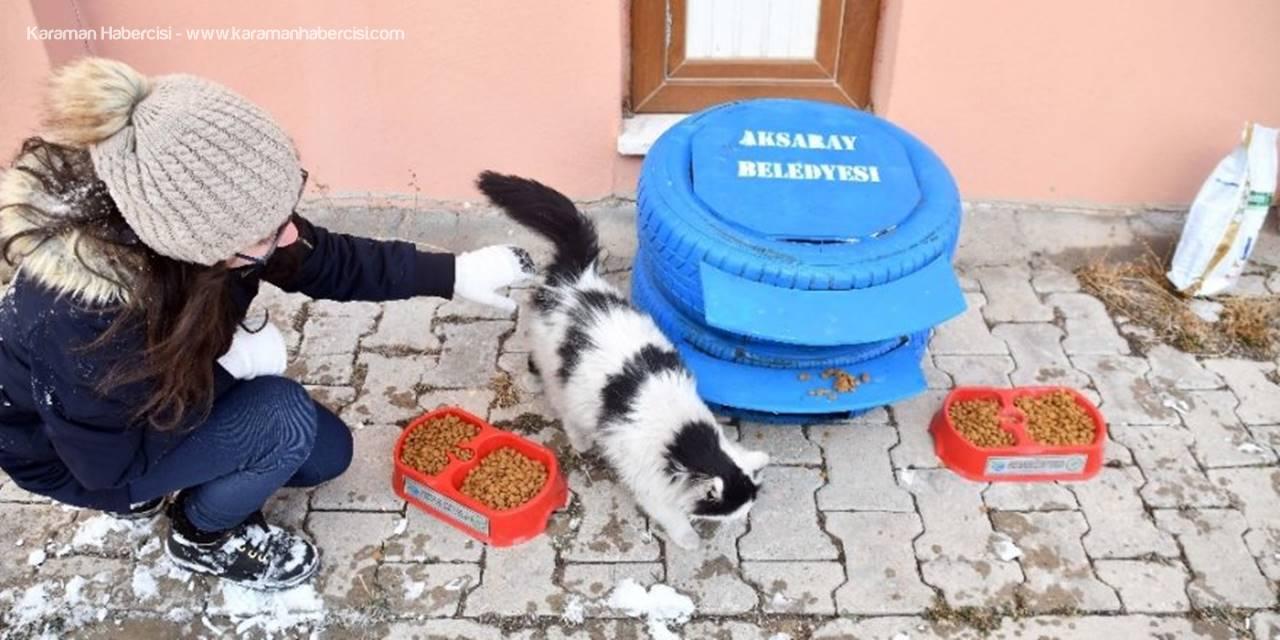 Aksaray Belediyesi Sokak Hayvanlarına Sahip Çıkıyor