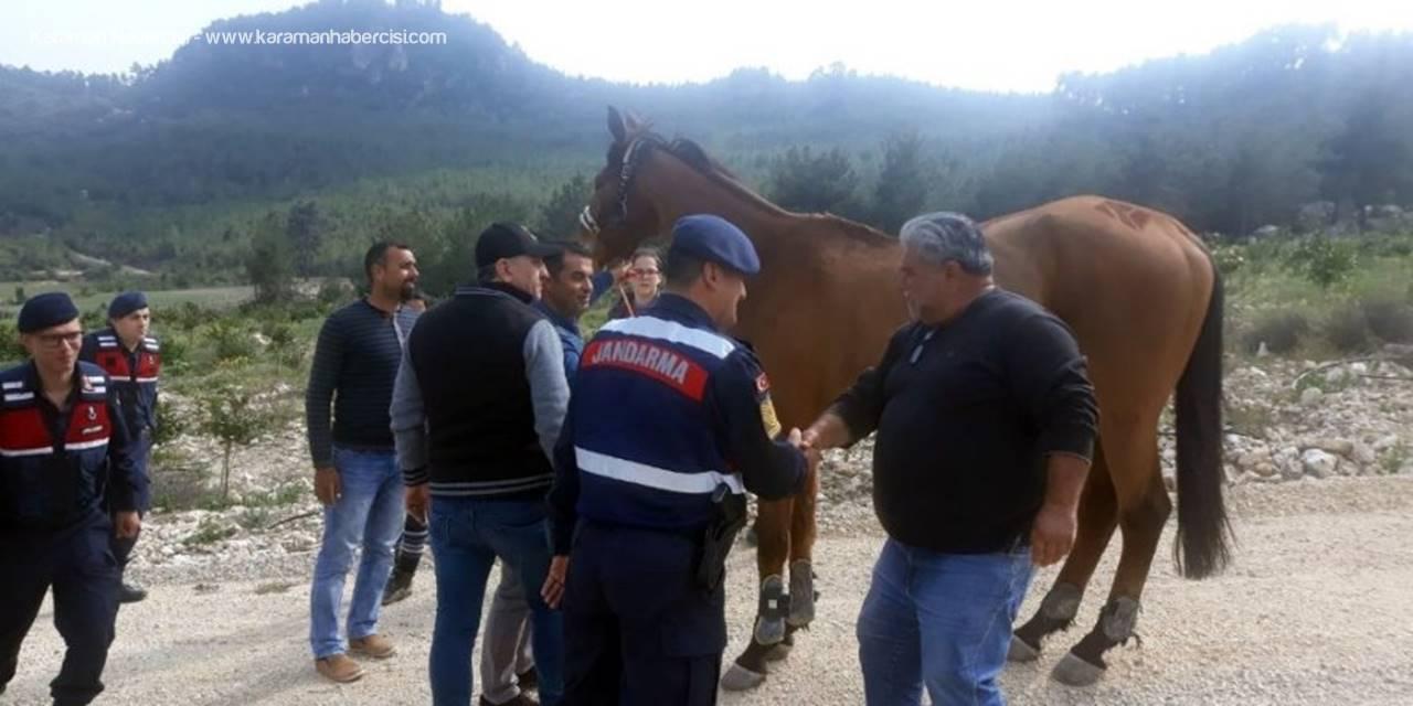 Mersin'de 100 Bin Liralık At, Ormanlık Alanda Bulundu